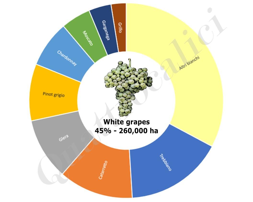 superfici vitigni a bacca bianca