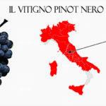 Pinot nero vitigno