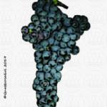 vitigno aglianicone