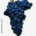 vitigno albarossa