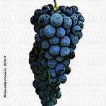 vitigno aleatico