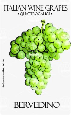 bervedino vitigno