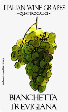 bianchetta trevigiana vitigno