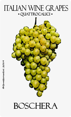 boschera vitigno