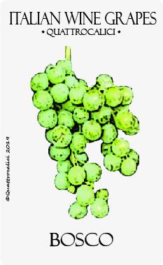 bosco vitigno