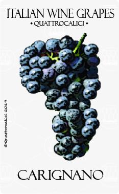 carignano vitigno