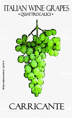 carricante vitigno