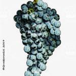 castiglione vitigno