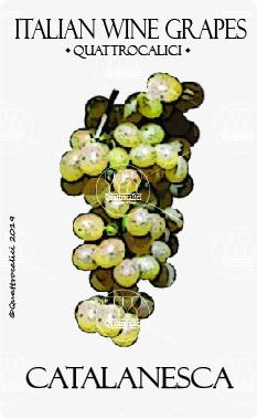 catalanesca vitigno