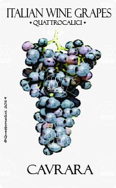 cavrara vitigno