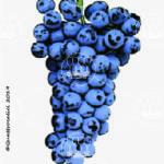 centesimino vitigno