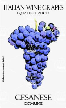 cesanese comune vitigno