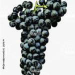 cesanese di affile vitigno