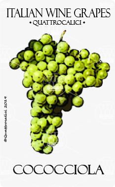 cococciola vitigno