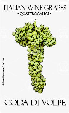 coda di volpe vitigno