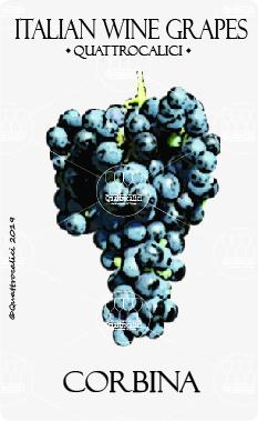 corbina vitigno