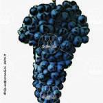 cornallin vitigno