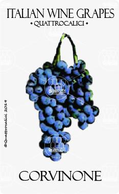 vitigno corvinone