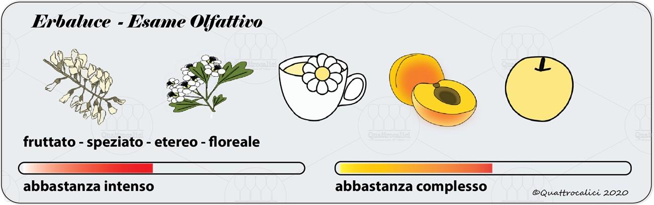 degustazione erbaluce olfattivo