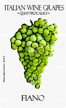 fiano vitigno