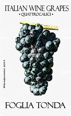 foglia tonda vitigno
