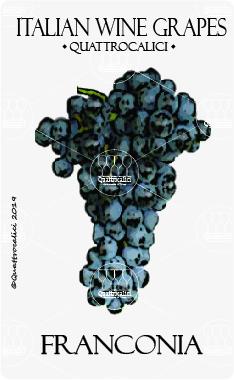 franconia vitigno