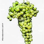 glera lunga vitigno