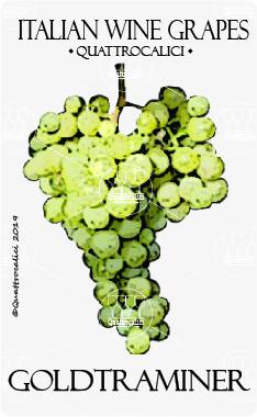 goldtraminer vitigno