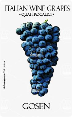 gosen vitigno