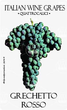 grechetto rosso vitigno