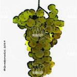 greco bianco vitigno