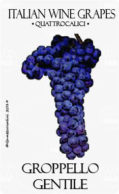 groppello gentile vitigno