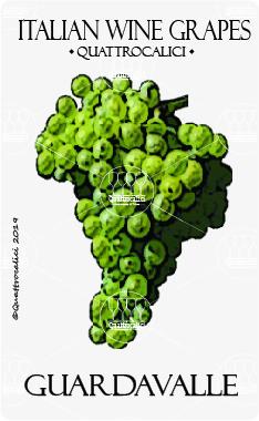 guardavalle vitigno