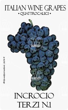 incrocio terzi n.1 vitigno