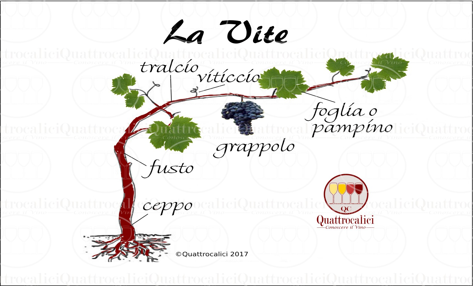 la vite da vino