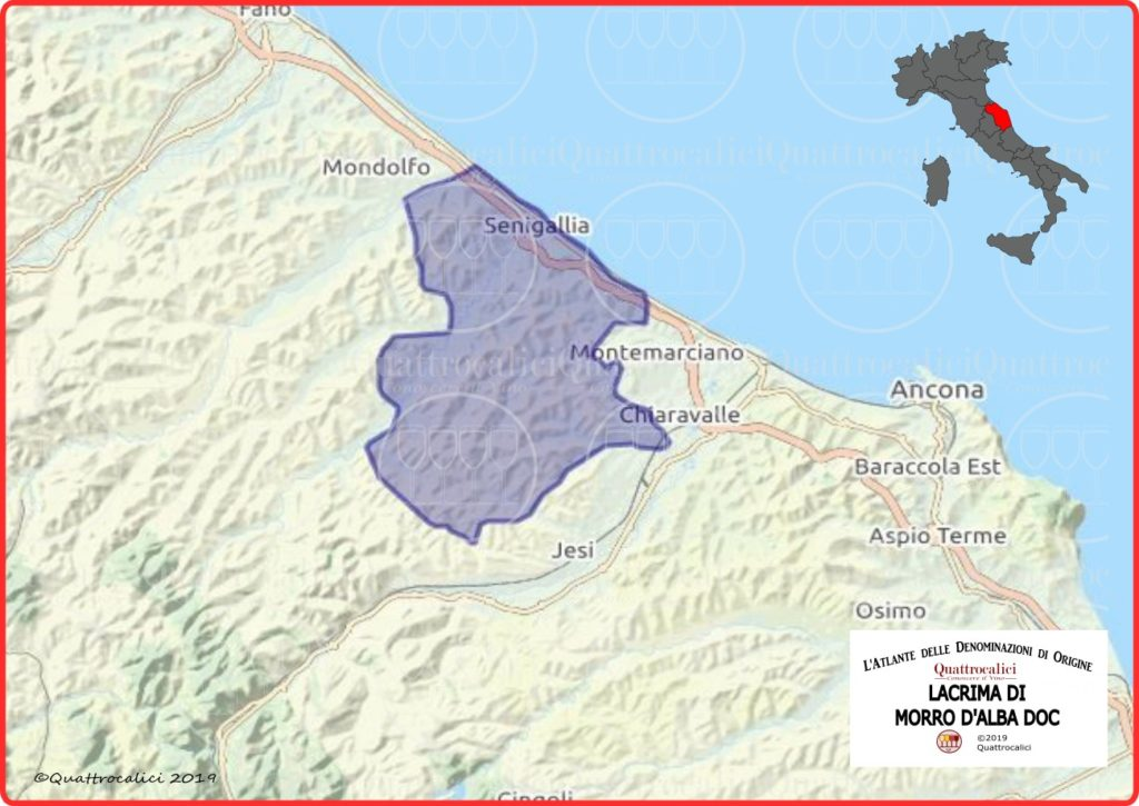 Cartina Lacrima di Morro d'Alba DOC