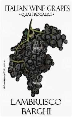 lambrusco barghi vitigno