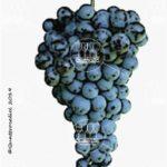 lambrusco a foglia frastagliata vitigno