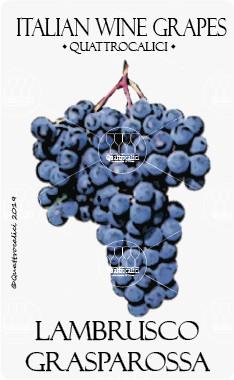 lambrusco grasparossa vitigno