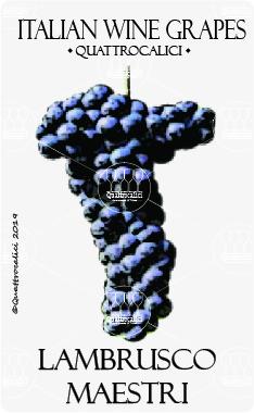 lambrusco maestri vitigno