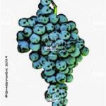 magliocco canino vitigno