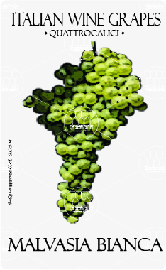 malvasia bianca vitigno