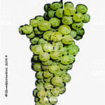 malvasia istriana vitigno
