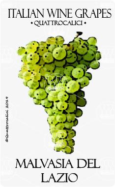 malvasia del lazio vitigno