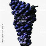 malvasia nera vitigno