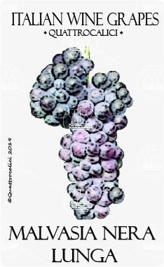 malvasia nera lunga vitigno