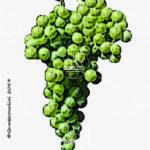 malvasia di sardegna vitigno