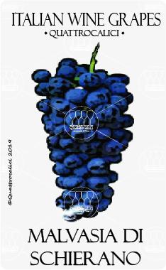 malvasia di schierano vitigno