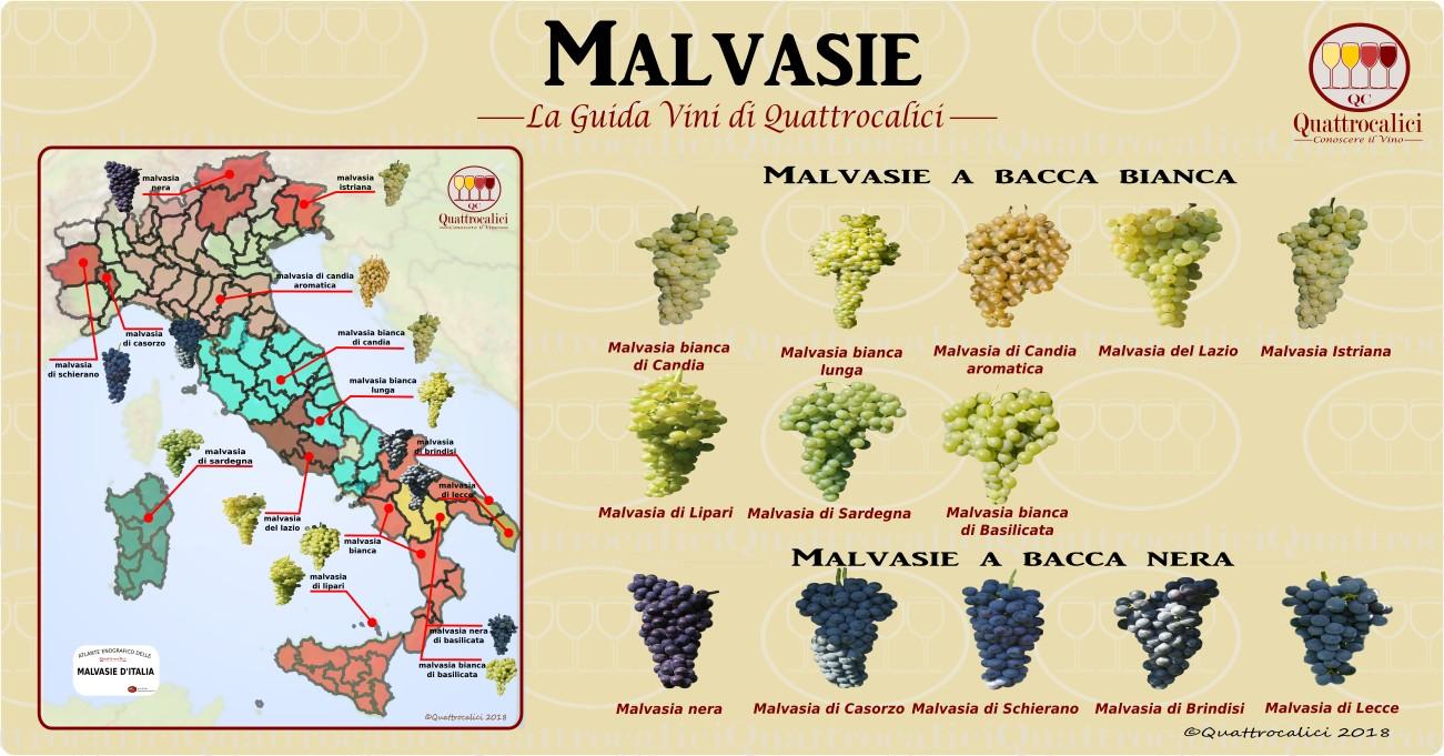 malvasie-vini