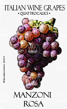 manzoni rosa vitigno